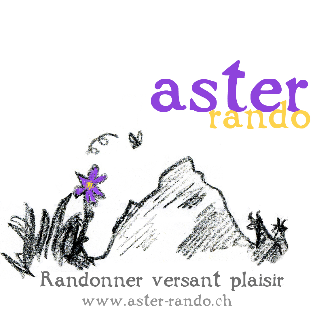 Aster rando